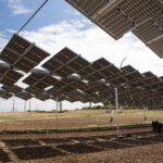 Energia: ENEA lancia la prima rete nazionale per l'agrivoltaico sostenibile